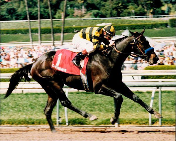 Top Horses Of 1996 Bob Baffert Racing Stables